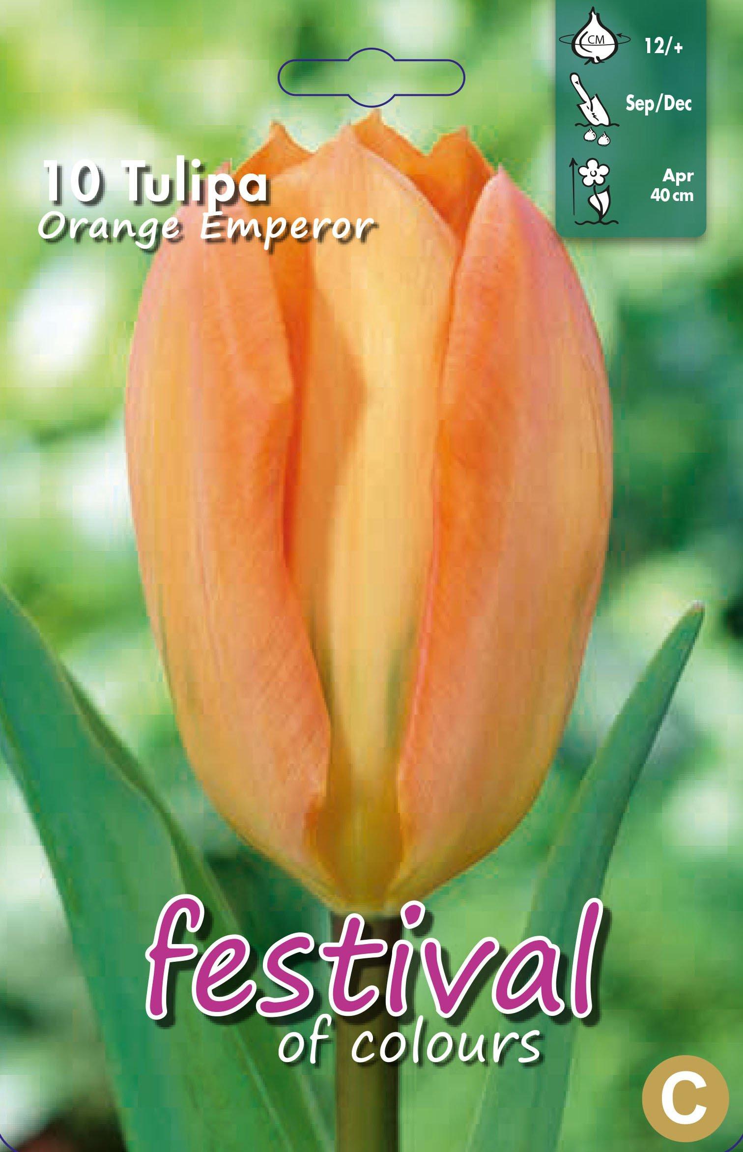 Tulipa Orange Emperor 10 stk