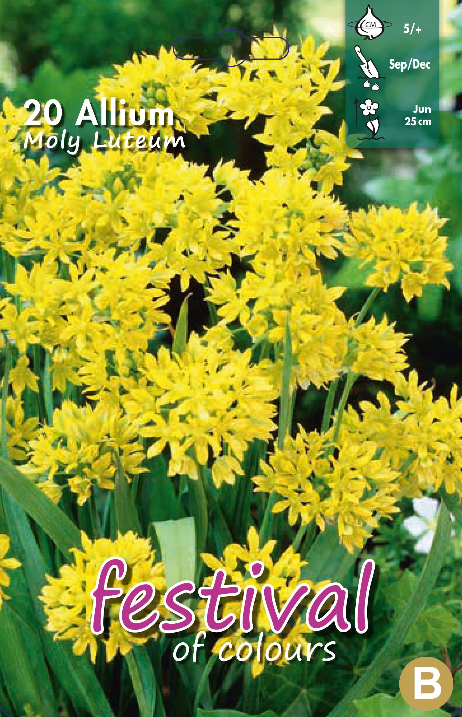 Allium Moly Luteum 20 stk