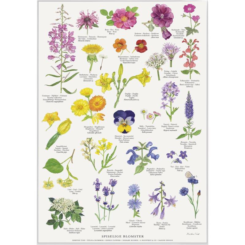 Plakat: Spiselige blomster, A2