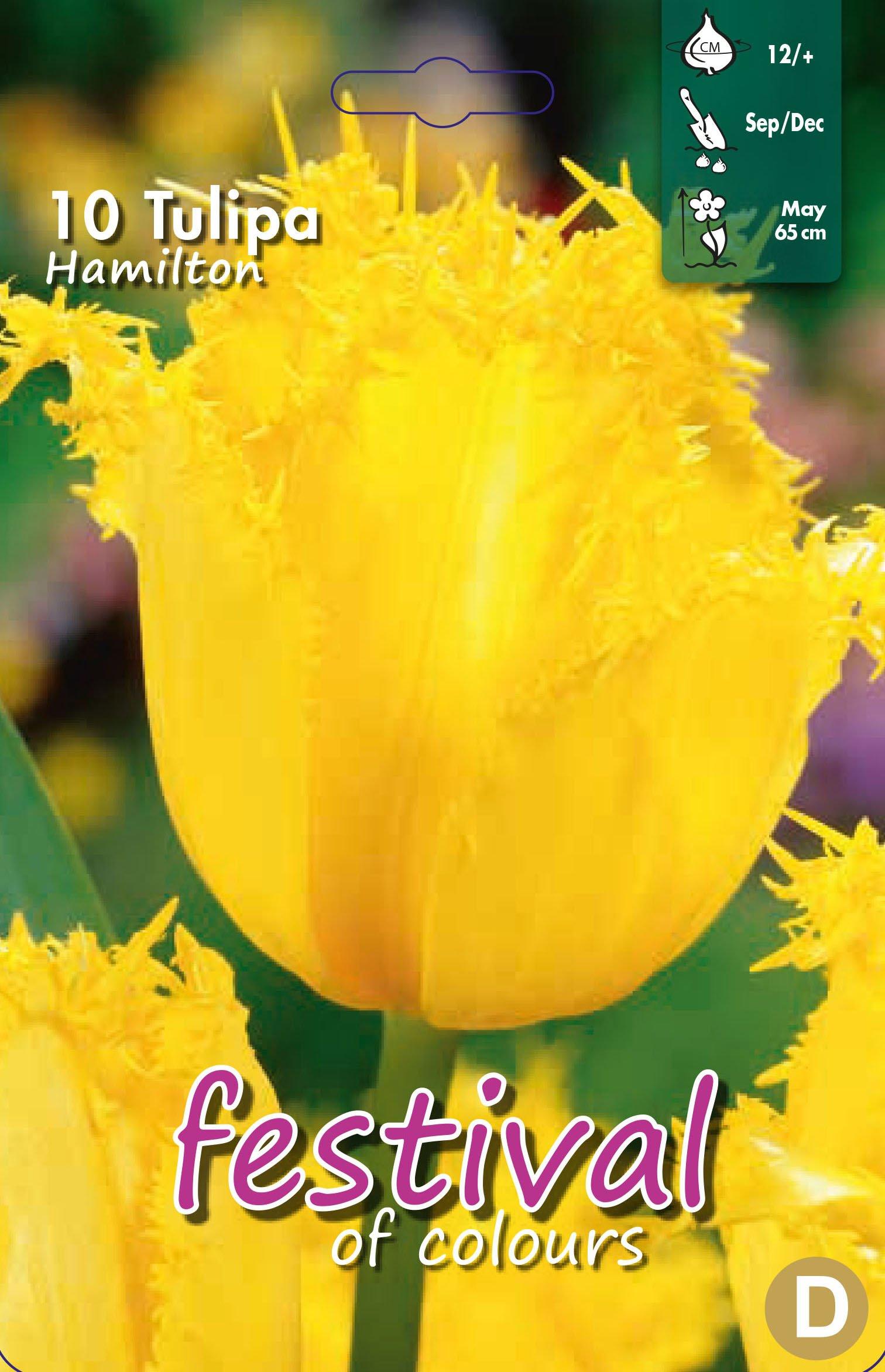 Tulipa Hamilton 10 stk