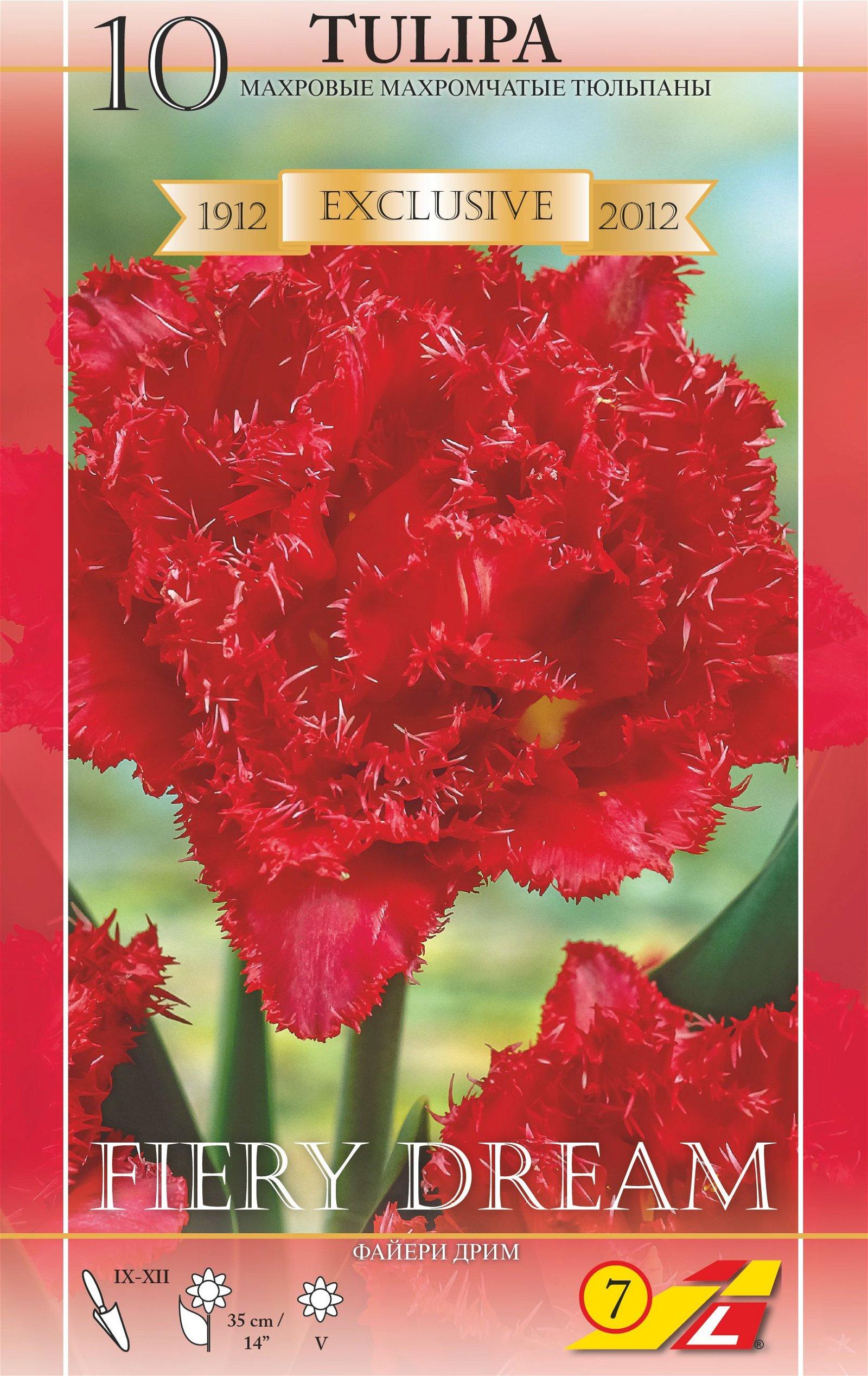 Tulipa 'Fiery Dream'