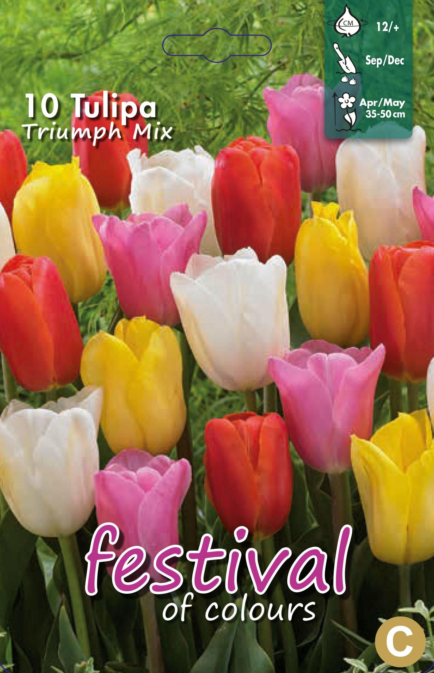 Tulipa Triumph Mix 10 stk