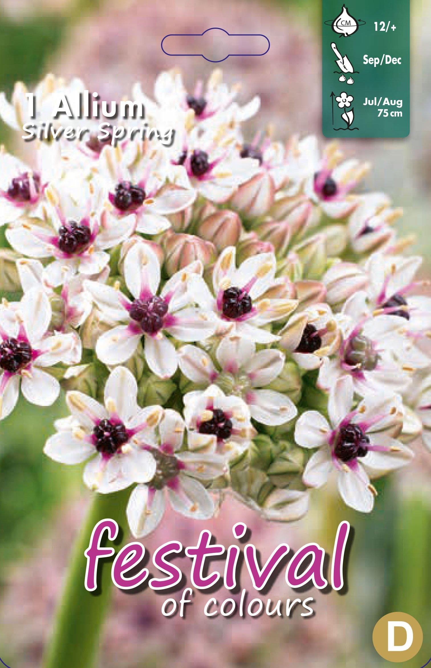 Allium Silver Spring 1 stk