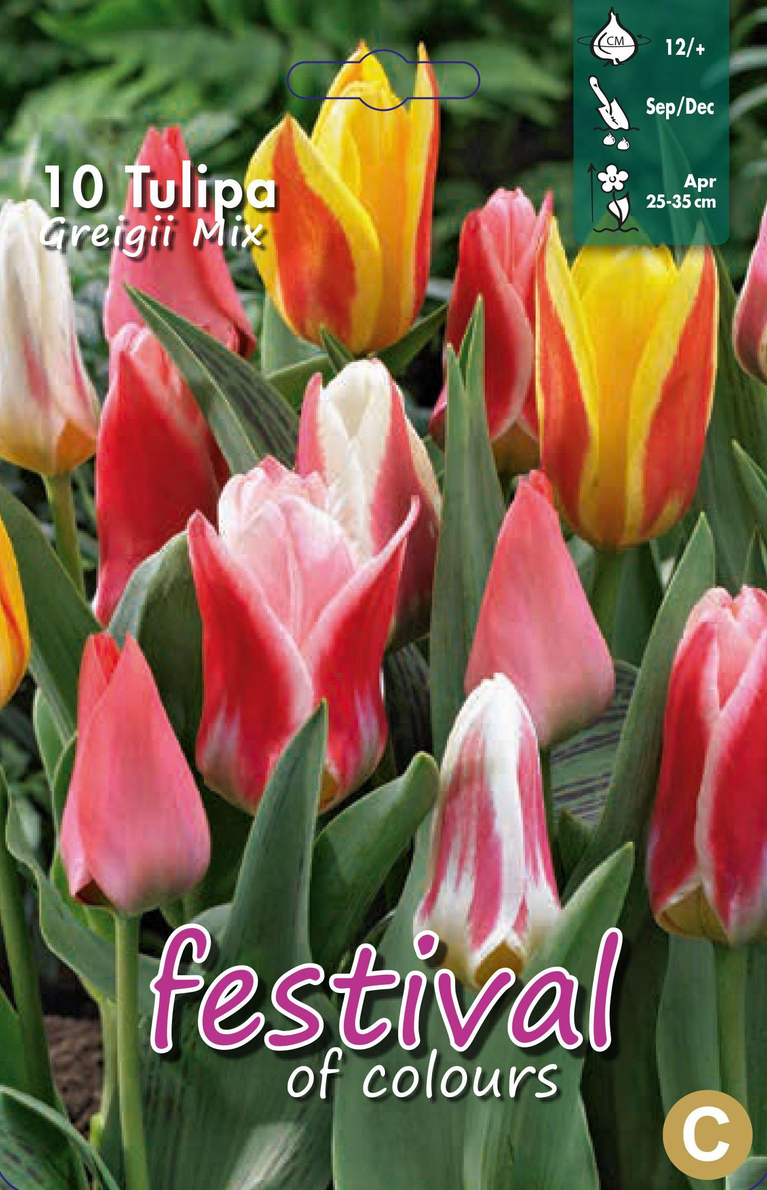 Tulipa Greigii Mix 10 stk