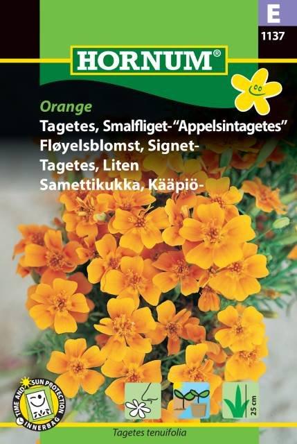 """Tagetes, Smalfliget- """"Appelsintag."""" (E)"""