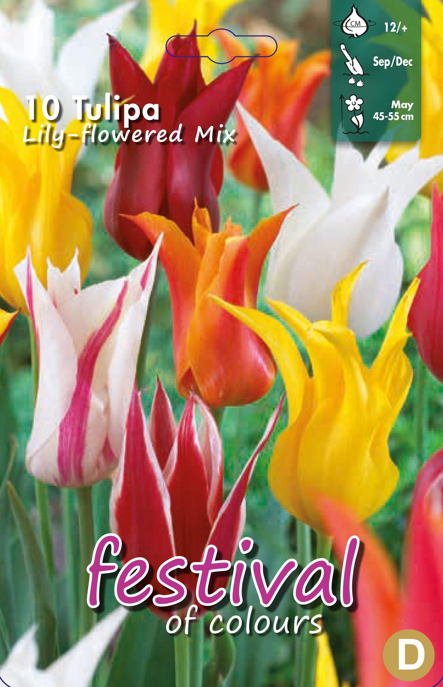 Tulipa Lily Flowered Mix 10 stk