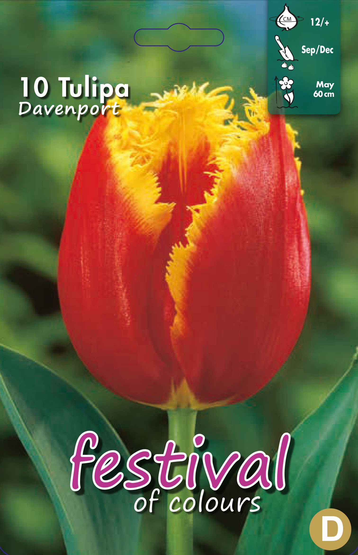 Tulipa Davenport 10 stk