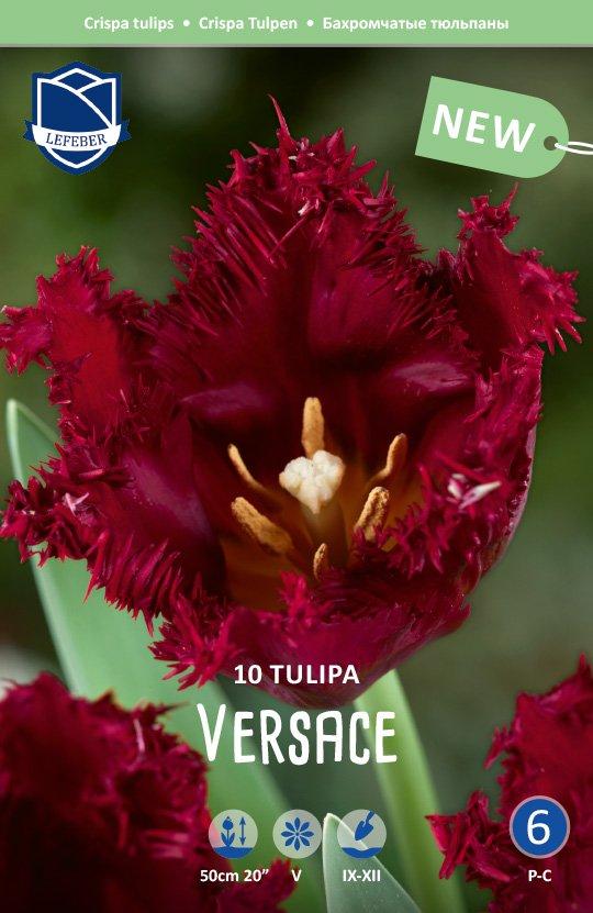 Tulipa 'Versace'