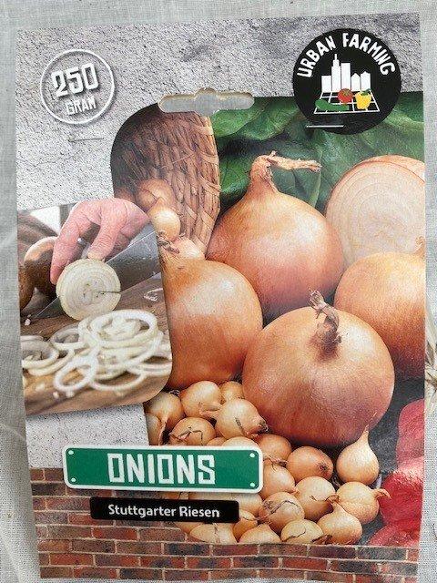 Løg, Onion Stuttgarter Riesen