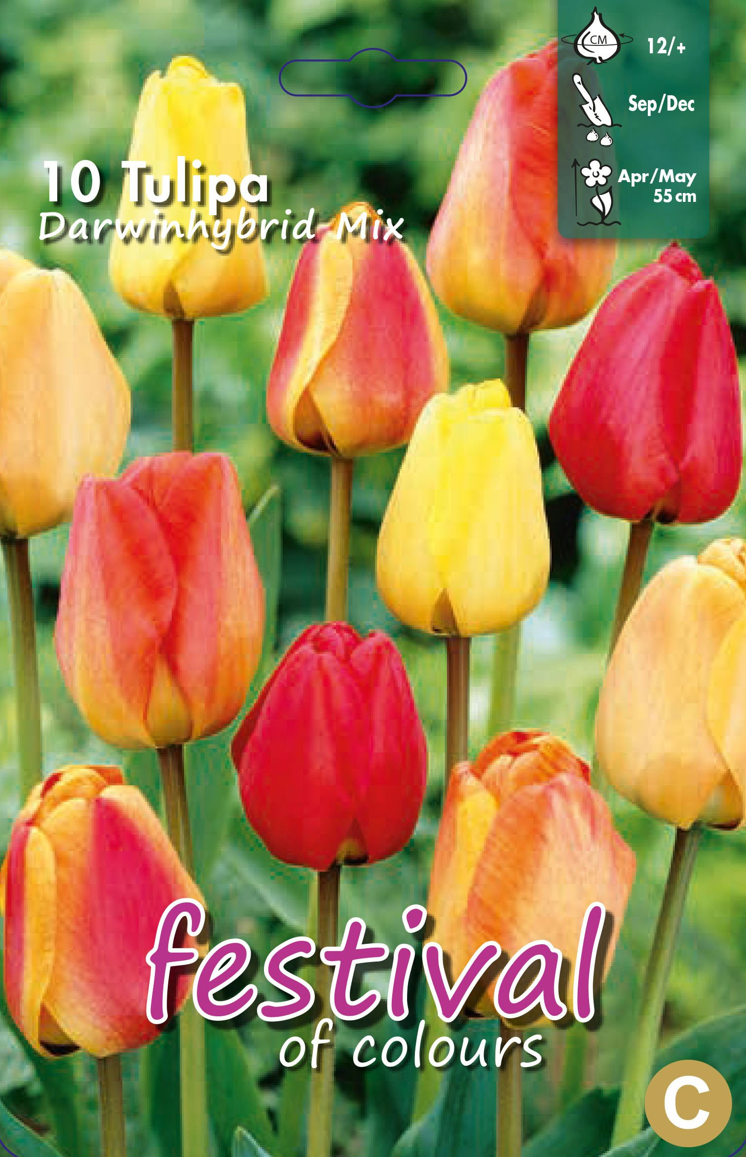 Tulipa Darwinhybrid Mix 10 stk
