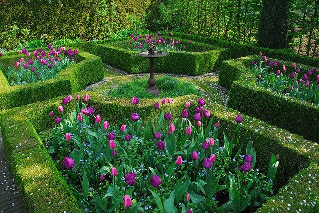 tulipa negrita miljø