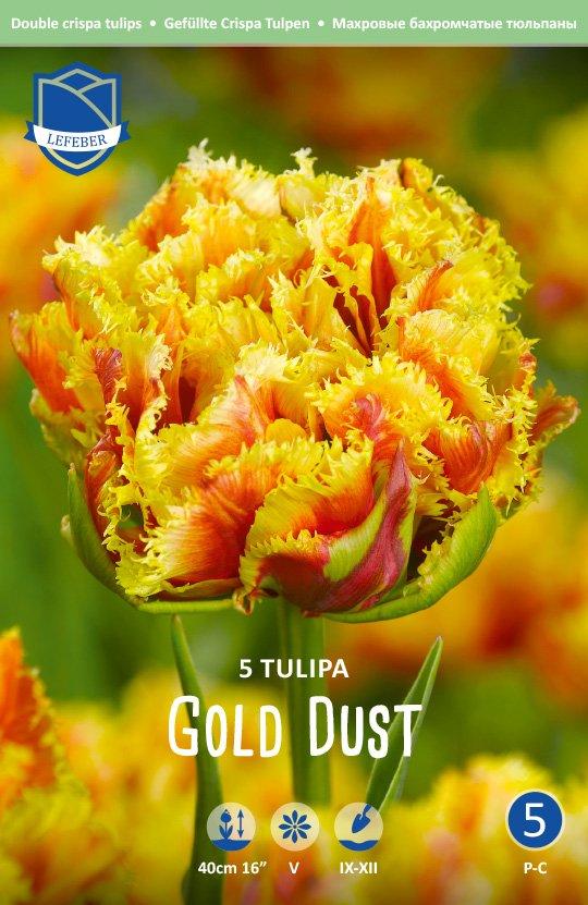 Tulipa 'Gold Dust'
