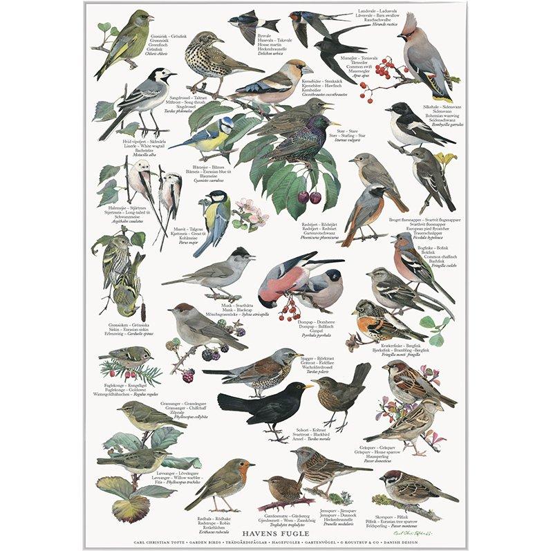 Plakat: Havens fugle, A2