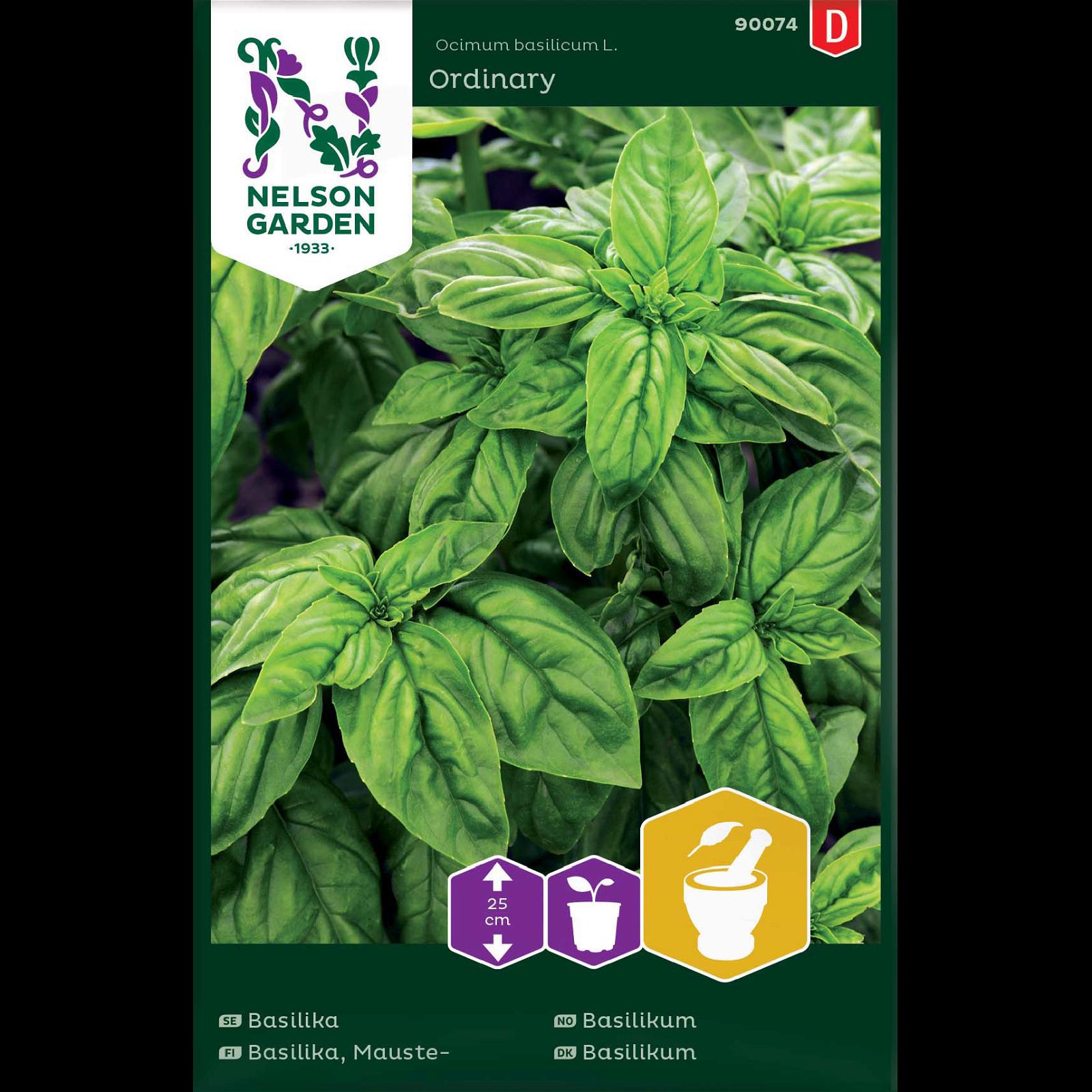 Basilikum, glatbladet, grøn