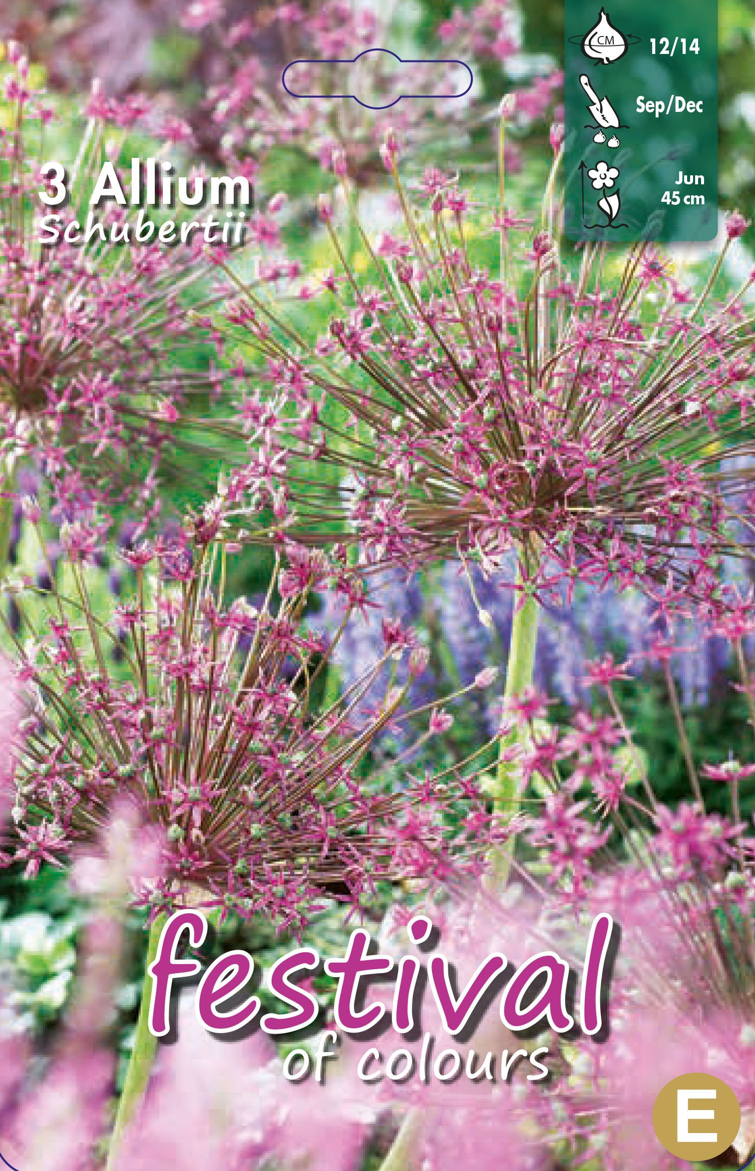 Allium Schubertii 3 stk