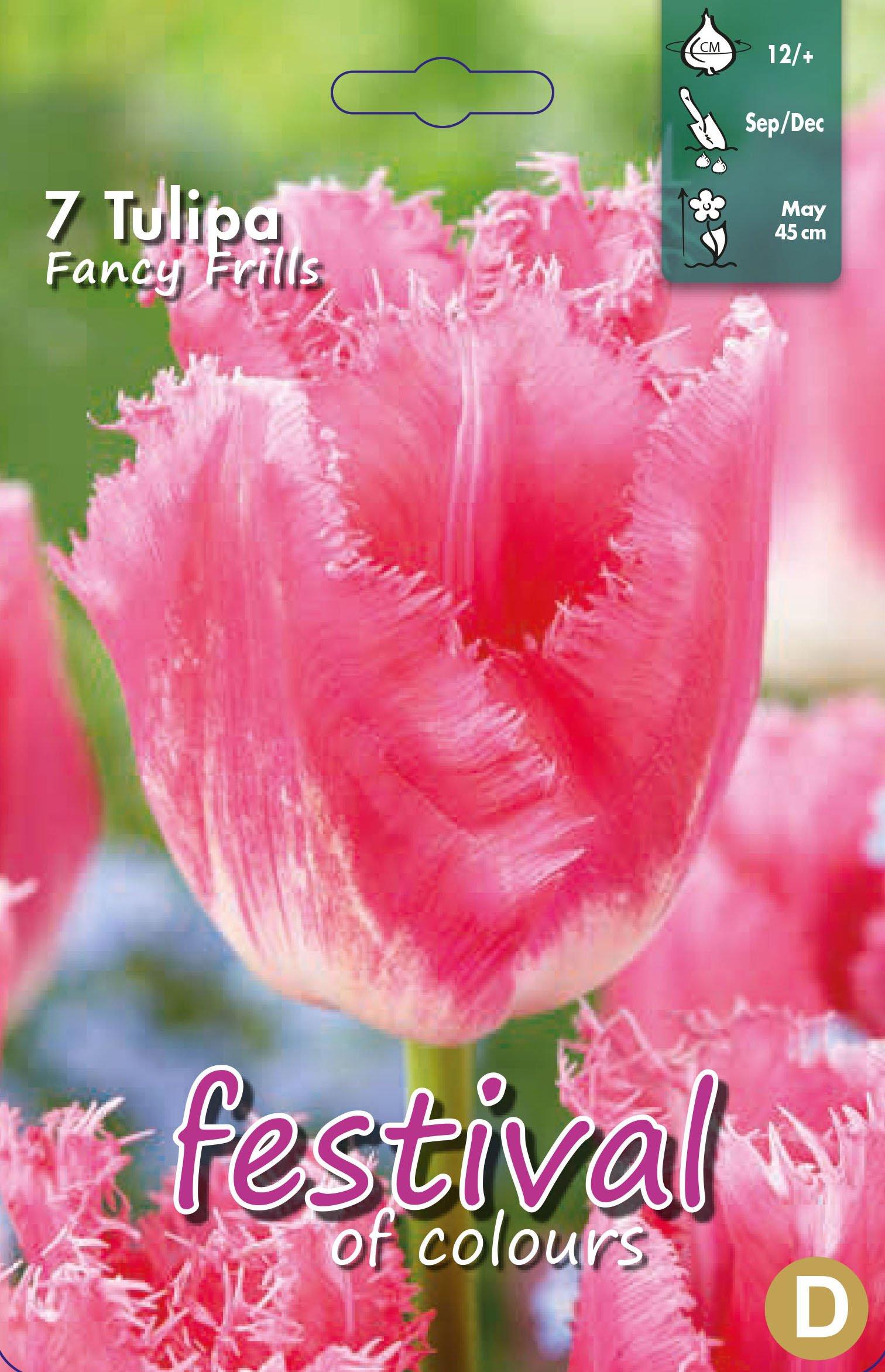 Tulipa Fancy Frills 7 stk