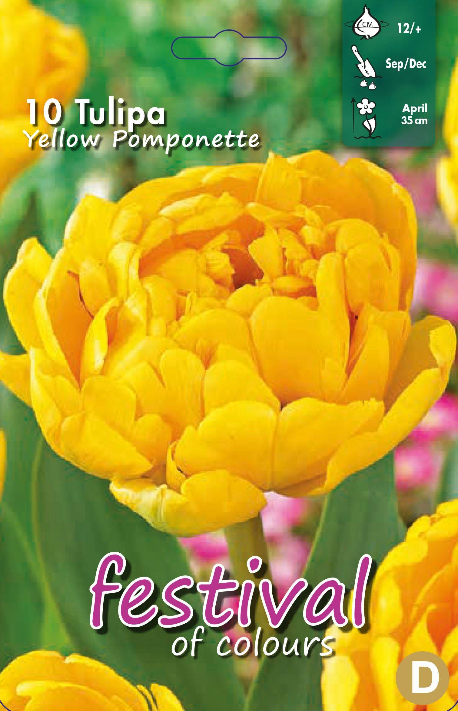 Tulipa Yellow Pomponette 10 stk