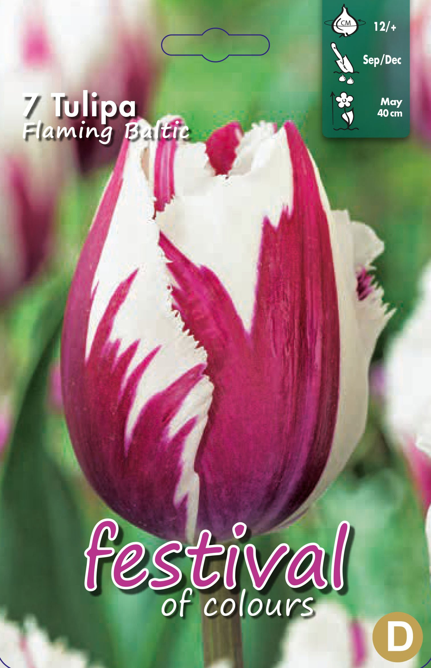 Tulipa Flaming Baltic 7 stk