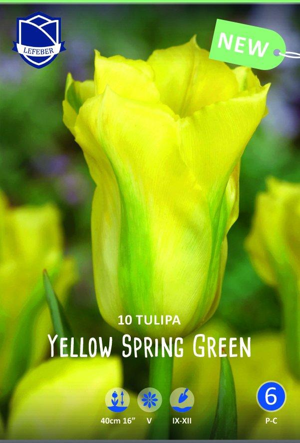 Tulipa 'Yellow Spring Green'