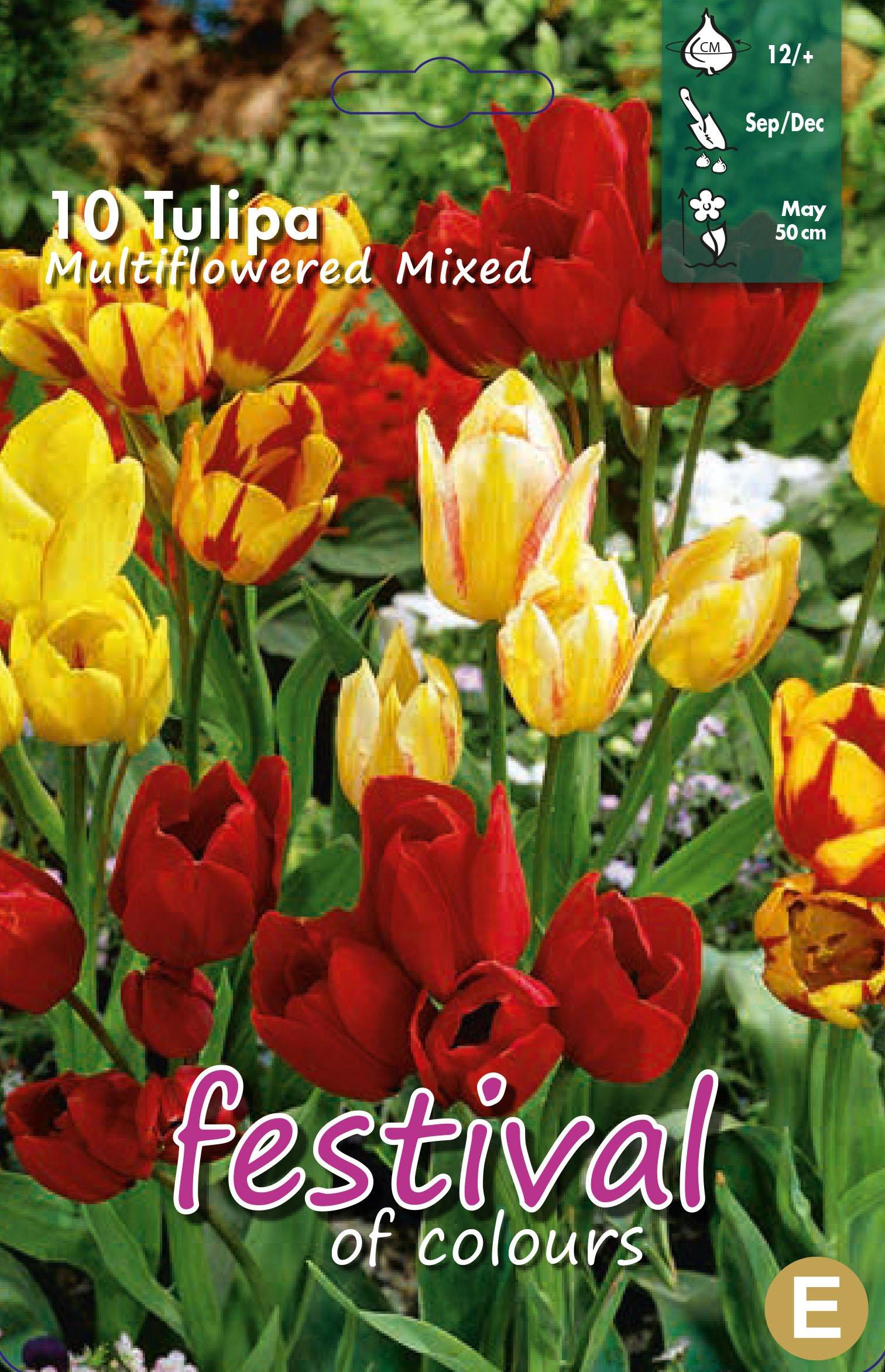 Tulipa Multiflowered Mixed 10 stk