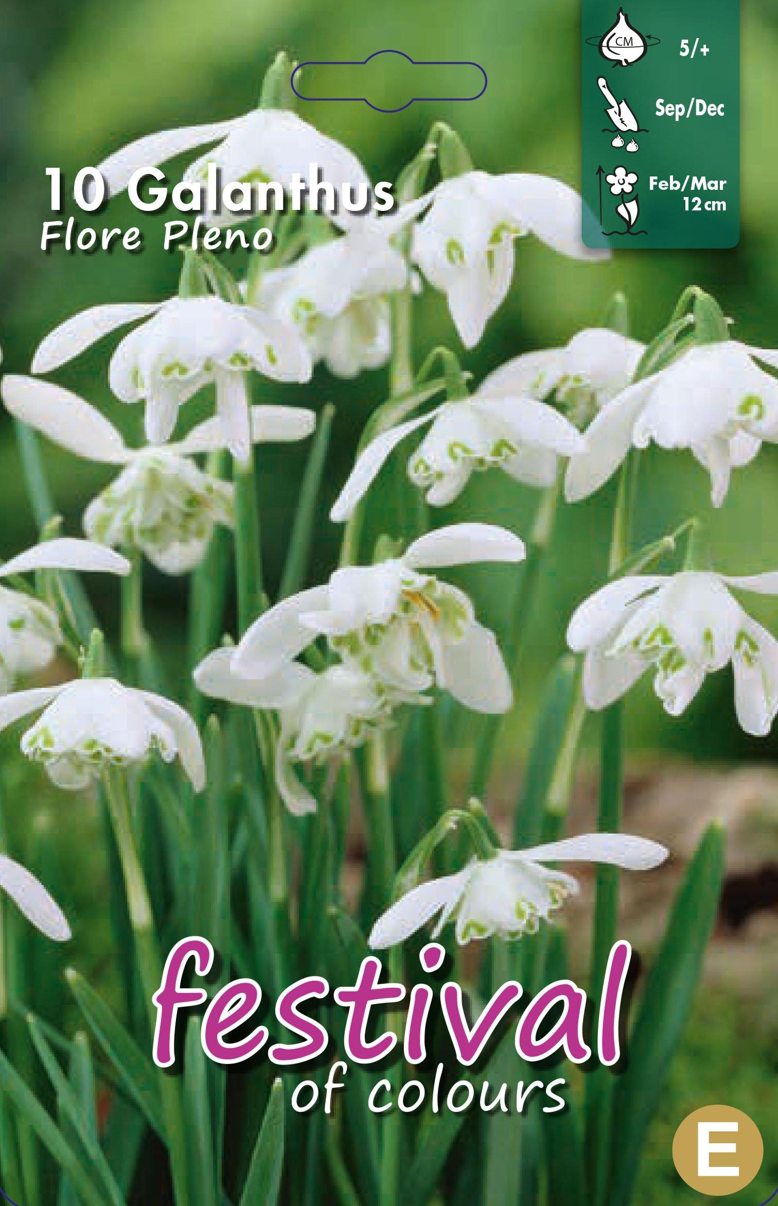 Galanthus Flore Pleno 10 stk