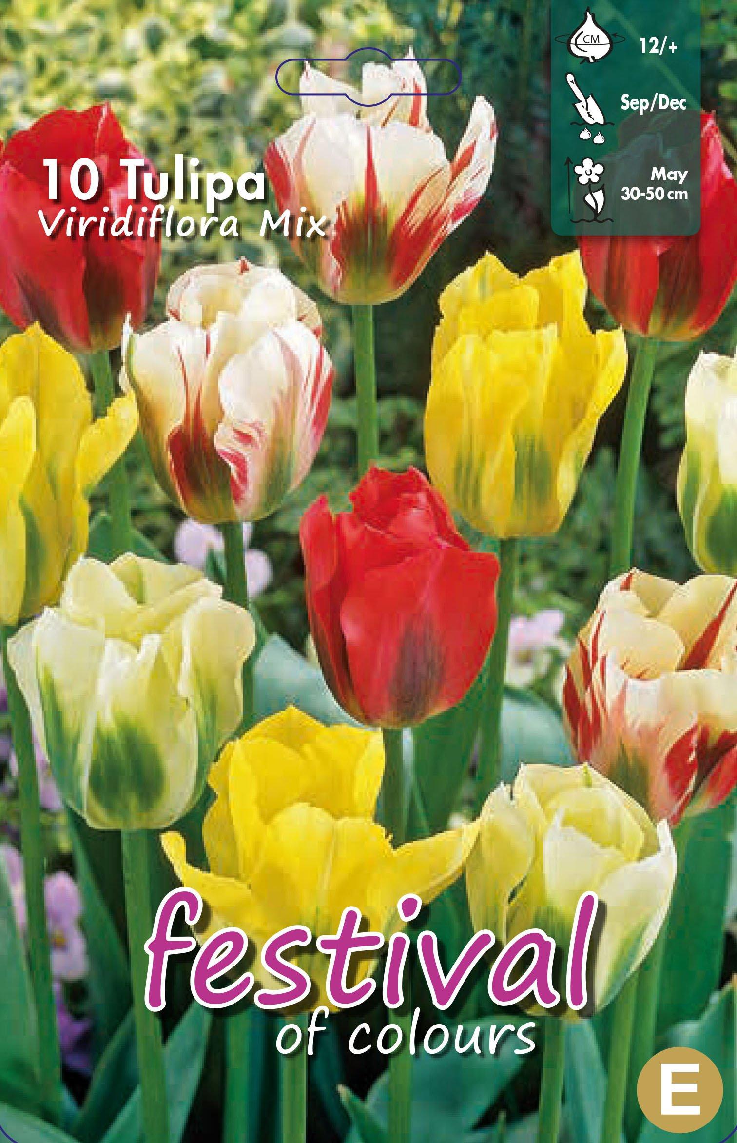 Tulipa Viridiflora Mix 10 stk